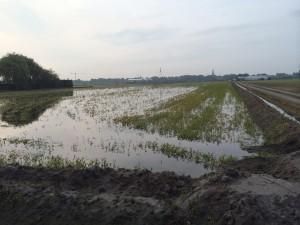 Inundatie 2014