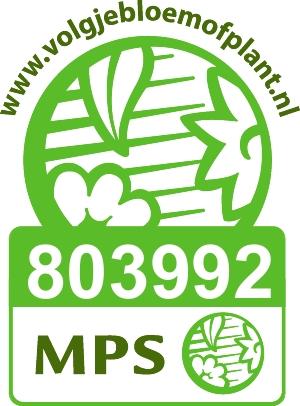 Certificaat particpant MPS ABC